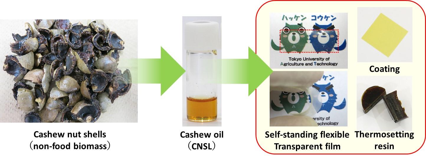 Development of bioplastics derived from non-food cashew nut